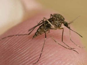Zika: Qld Health spraying a second site